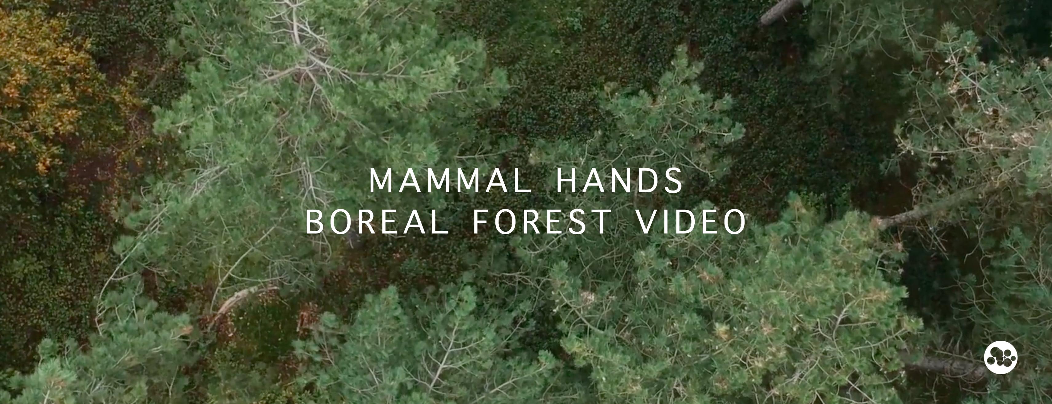 1. Mammal Hands Boreal Forest Facebook Banner