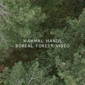 Mammal Hands 'Boreal Forest' video + autumn tour dates